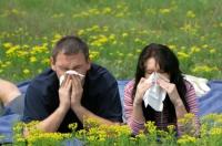 Curare le allergie
