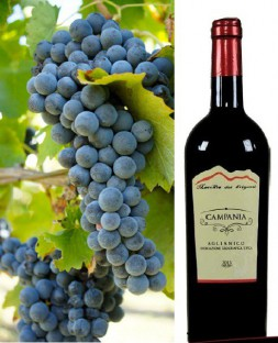 Aglianico igt Campania red wine