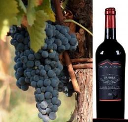 Red wine Campi Taurasini Doc Irpinia