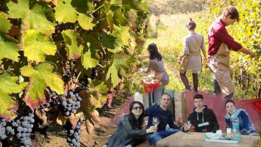 Esperienza in vigna, il percorso del vino dalla terra al bicchiere