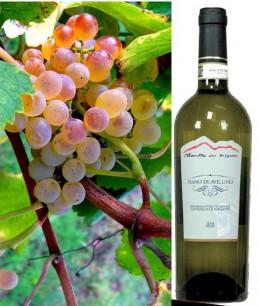 Fiano di Avellino DOCG Weißwein - Kaufen italienischen Wein