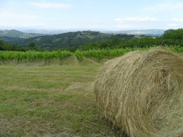 Campania Aglianico IGT: our vineyards of red grapes