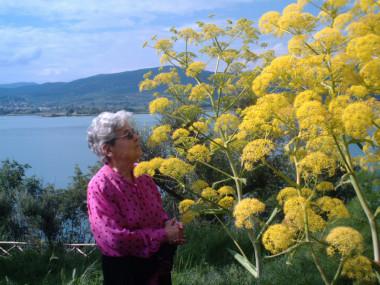 I fiori gialli e il lago Trasimeno