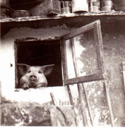 Vinicio alla finestra